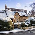 A Thatched Cottage In The Cotswolds  by Andrew  Michael