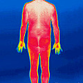 A Thermogram Of A Nude Man Back by Ted Kinsman