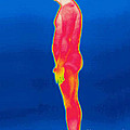 A Thermogram Of A Nude Man Profile by Ted Kinsman