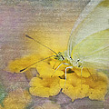 A Touch Of Yellow by Betty LaRue