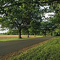 A Tree-lined Rural Virginia Road by Medford Taylor