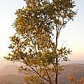 A Tree Outlined By The Rays Of The Setting Sun At Pachmarhi by Ashish Agarwal