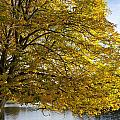 A Tree With Golden Leaves And A Park by John Short