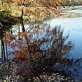 A Trees Reflection And Fallen Leaves  by Kim Galluzzo Wozniak