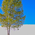 A Trees Shadow by Stacy La Salle
