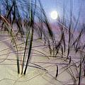 A View Of A Full Moon Rising by Raymond Gehman