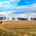 A View Of Geysers  by Robert Bales