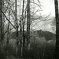 A View Through The Trees Bw by Kathleen Grace