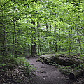 A Walk In The Catskills by Wes and Dotty Weber