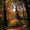 A Walk In The Park by Beth Phifer