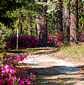 A Walk In The Springtime Woods by Suzanne Gaff