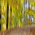 A Walk In The Woods by Susan Leggett