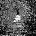 A Walk In Winter by Barbara S Nickerson