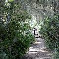 a walk about fairy wood - Mediterranean autumn forest by Pedro Cardona Llambias