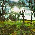 A Winter's Walk by Steve Taylor