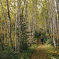 A Woman Walks Down A Birch Tree-lined by George F. Mobley