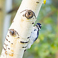A Woodpeck Behind An Eye Of A Tree by Ellie Teramoto