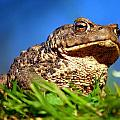 A Worm's Eye View by Gavin Macrae