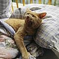 A Yawning Cat Wakes From A Nap by Sisse Brimberg