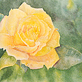 A Yellow Rose by Jean A Chang
