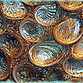 Abalones by Judi Bagwell