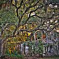 Abandoned But Not Forgotten by Andrew Crispi