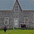 Abandoned Cow House - Barrow Bay by Cyryn Fyrcyd