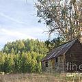 Abandoned Rustic Cabin by Matt Tilghman