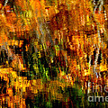 Abstract Babcock State Park by Thomas R Fletcher