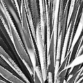 Abstract Cactus by Elizabeth Ericson