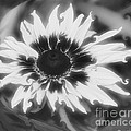Abstract Daisy by Donna Brown