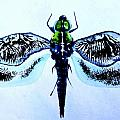 Abstract Dragonfly 3 by J Vincent Scarpace