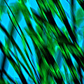 Abstract Green Grass by Mary Anne Williams