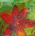 Abstract Lilly  by Sacred  Muse