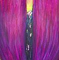 Abstract Magenta Tulip Flower  by Kazuya Akimoto