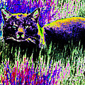 Abstract Of Tabby by Eric Forster