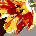 Abstract Parrot Tulip by Elaine Plesser