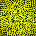 Abstract Sunflower Pattern by Benanne Stiens