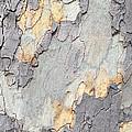 Abstract Tree Bark II by Regina Geoghan