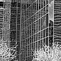 Abstract Walls Black And White by Phyllis Denton