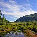 Acadian Marsh by David Rucker