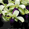 Accented Purple Poster Orchid Fx  by G Adam Orosco