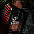 Accordionist by Michael Goyberg