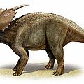 Achelousaurus Horneri, A Prehistoric by Sergey Krasovskiy