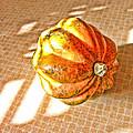 Acorn Squash by Bonnie Bruno