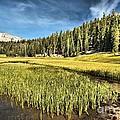 Across The Meadow by Adam Jewell