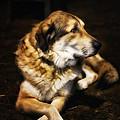 Adam - The Loving Dog by Bill Tiepelman