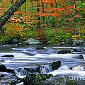 Adirondack Stream 2 by Mike Nellums