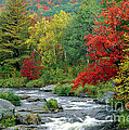 Adirondack Stream 4 by Mike Nellums