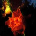 Adoring Light by Adam Vance